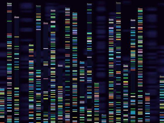 Genomic Analysis Visualisation